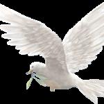 güvercin-300x250