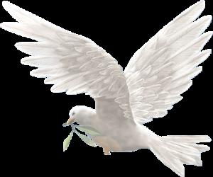 1Eylül Dünya Barış Günü